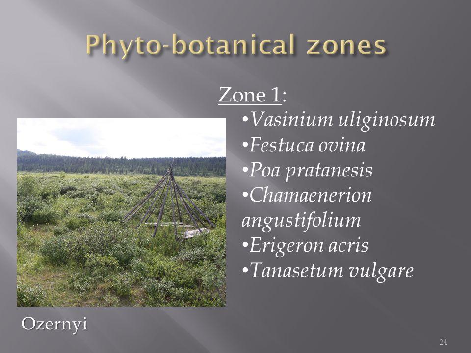 Zone 1: Vasinium uliginosum Festuca ovina Poa pratanesis Chamaenerion angustifolium Erigeron acris Tanasetum vulgare 24 Ozernyi