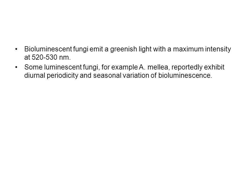 Bioluminescent fungi emit a greenish light with a maximum intensity at 520-530 nm.