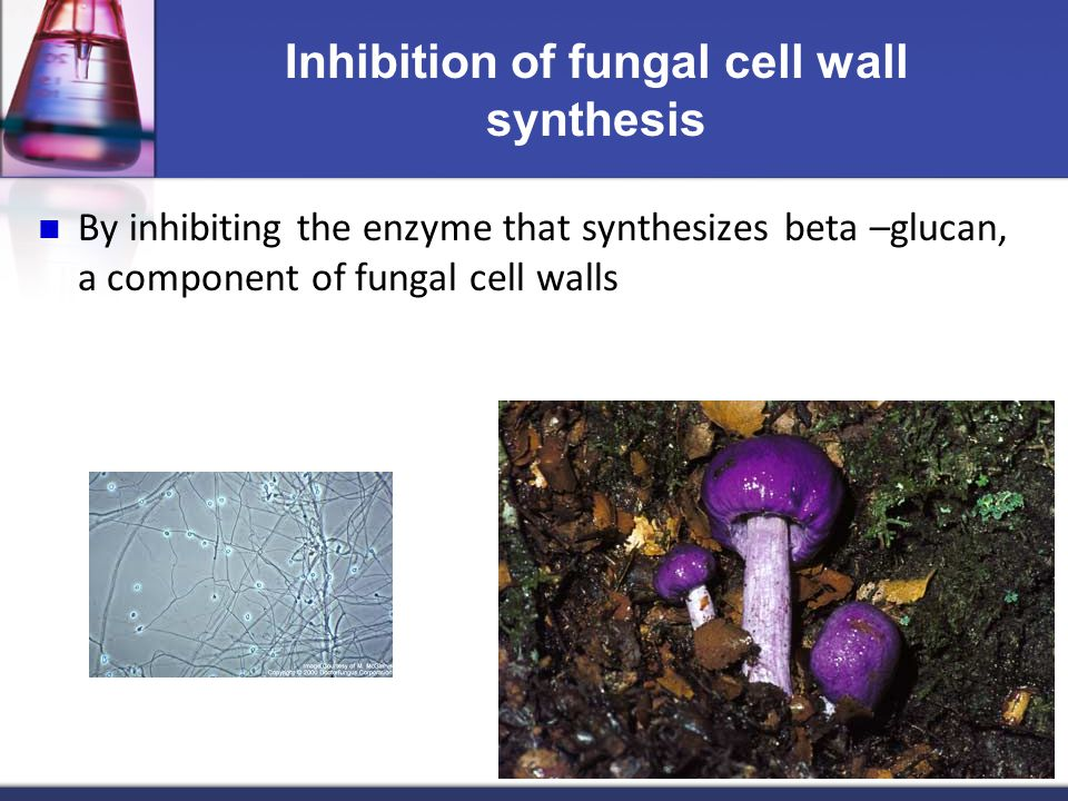 Inhibition of fungal cell wall synthesis By inhibiting the enzyme that synthesizes beta –glucan, a component of fungal cell walls