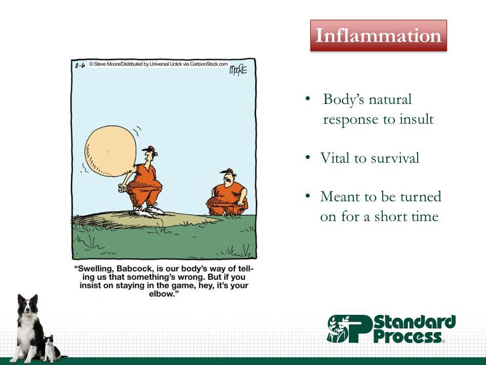 The Gastrointestinal System 70% of immune system Enterocytes Mucosal barrier Gut flora Enteric nervous system