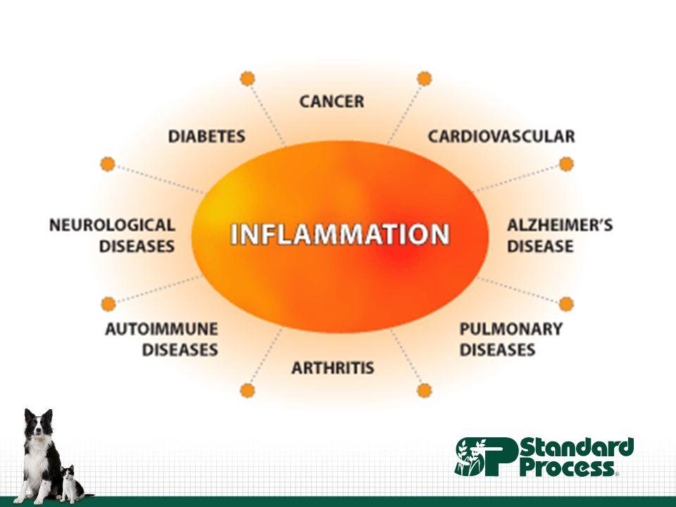 Leaky Gut Syndrome Source: www.ktcolgan.com www.ktcolgan.com