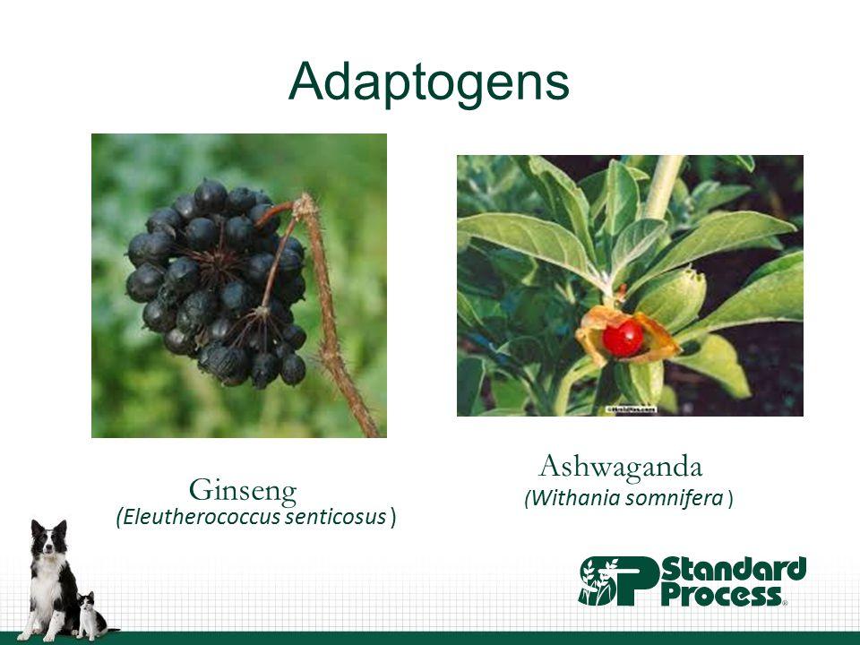 Adaptogens (Eleutherococcus senticosus ) Ginseng ( Withania somnifera ) Ashwaganda