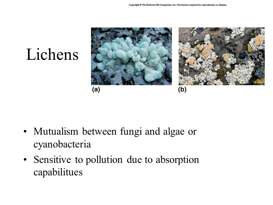 Lichens Mutualism between fungi and algae or cyanobacteria Sensitive to pollution due to absorption capabilitues
