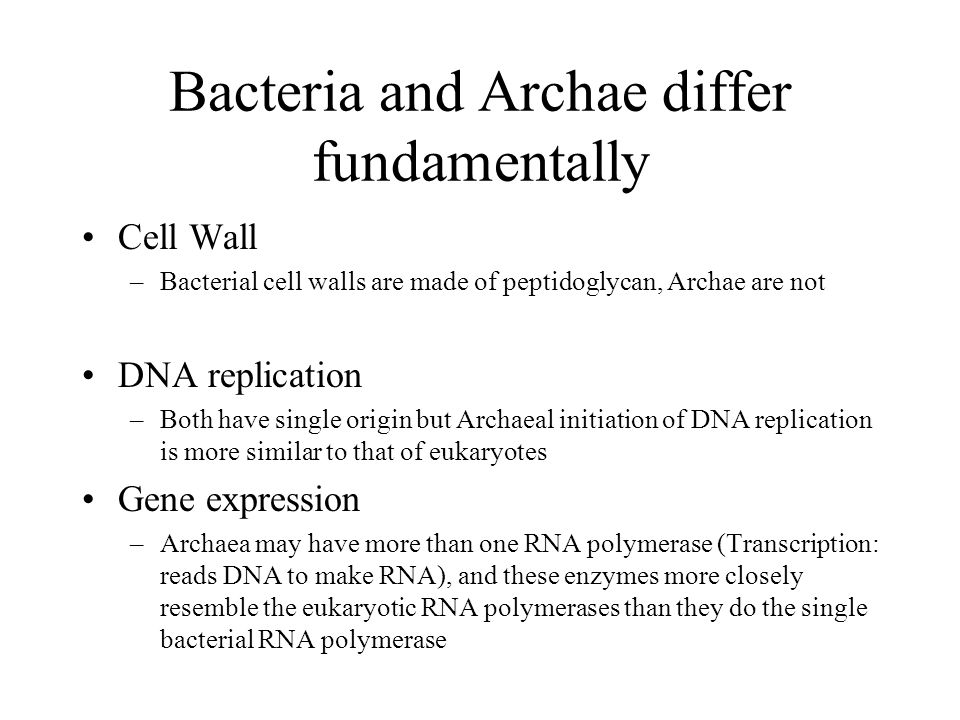 Bacteria and Archae differ fundamentally Cell Wall –Bacterial cell walls are made of peptidoglycan, Archae are not DNA replication –Both have single origin but Archaeal initiation of DNA replication is more similar to that of eukaryotes Gene expression –Archaea may have more than one RNA polymerase (Transcription: reads DNA to make RNA), and these enzymes more closely resemble the eukaryotic RNA polymerases than they do the single bacterial RNA polymerase