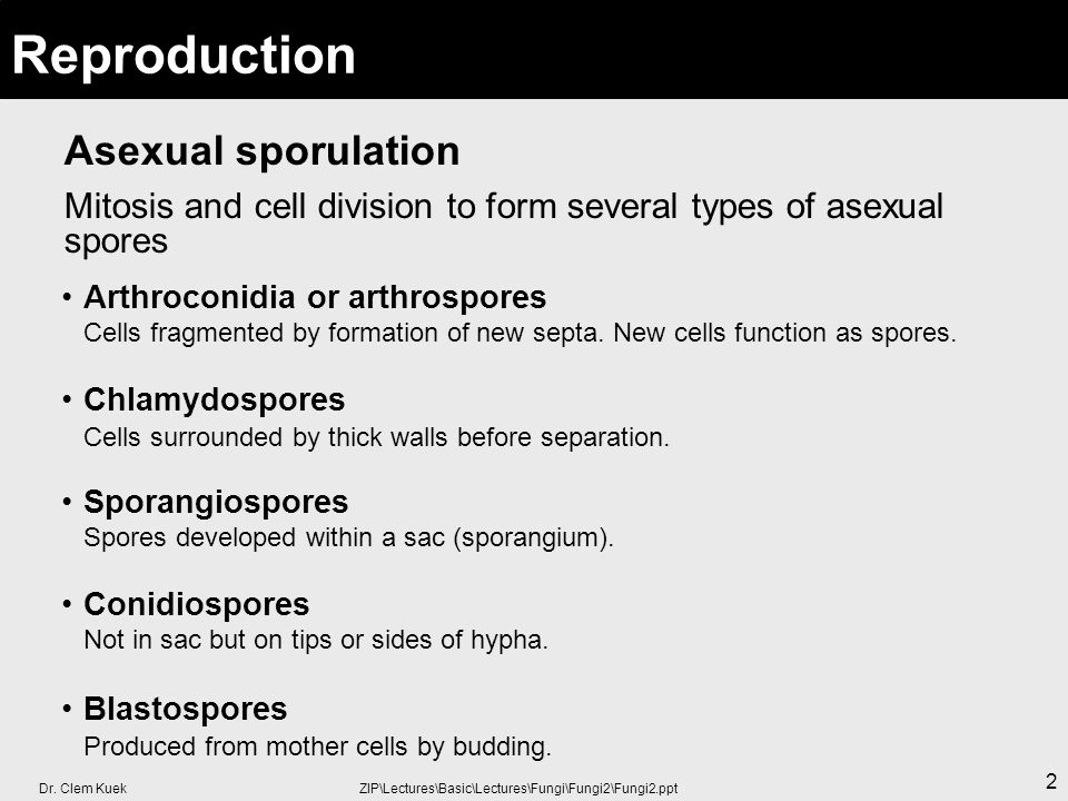 Dr. Clem Kuek ZIP\Lectures\Basic\Lectures\Fungi\Fungi2\Fungi2.ppt 2 Asexual sporulation Mitosis and cell division to form several types of asexual spo
