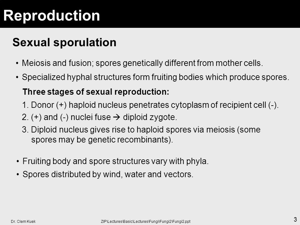 Dr. Clem Kuek ZIP\Lectures\Basic\Lectures\Fungi\Fungi2\Fungi2.ppt 3 Sexual sporulation Reproduction Meiosis and fusion; spores genetically different f
