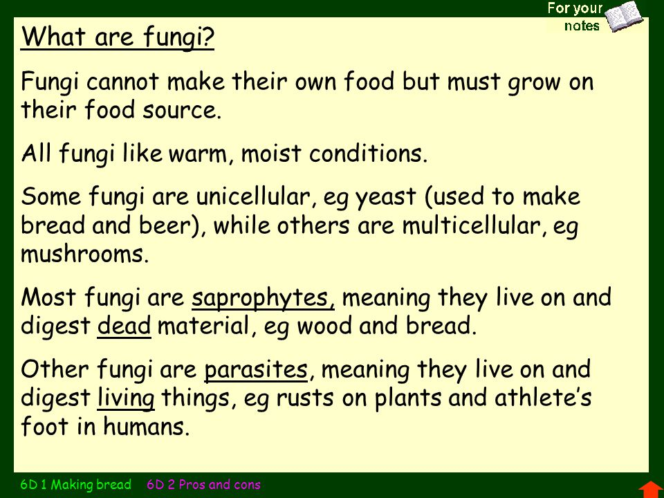 Structure and reproduction of fungi The main 'body' of a multicellular fungus consists of fine threads, called hyphae, that burrow through the surface layer of the food source, absorbing nutrients through extra-cellular digestion.