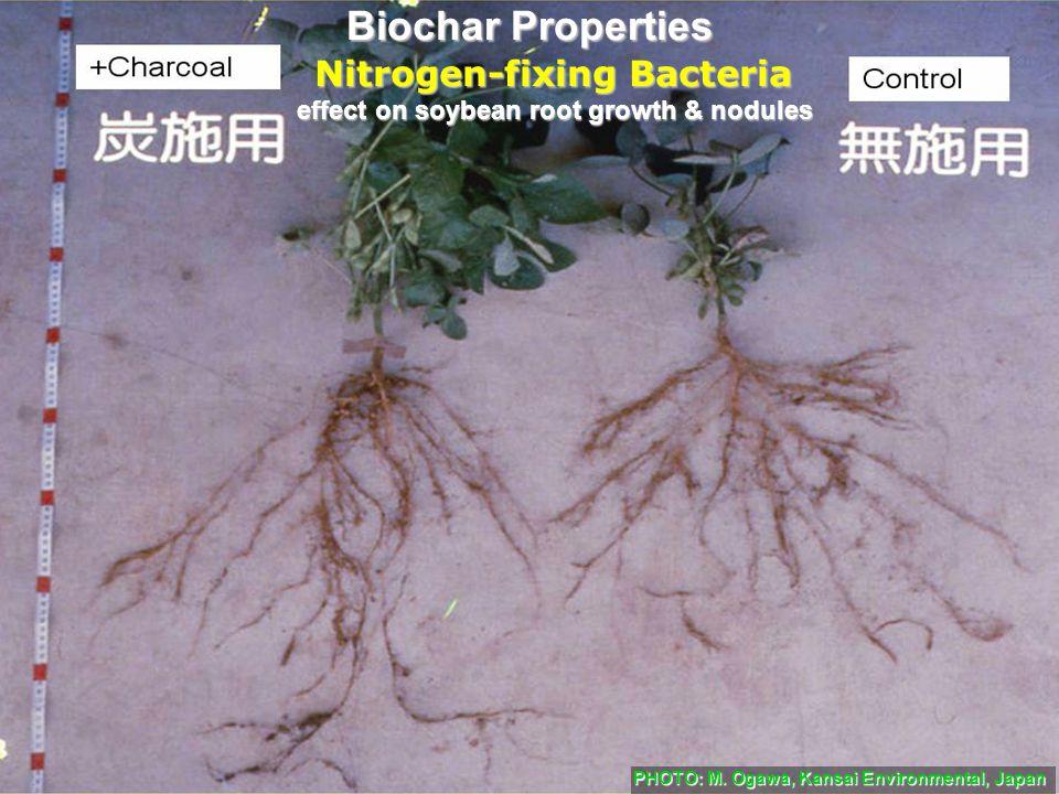 effect on soybean root growth & nodules PHOTO: M. Ogawa, Kansai Environmental, Japan Nitrogen-fixing Bacteria Biochar Properties
