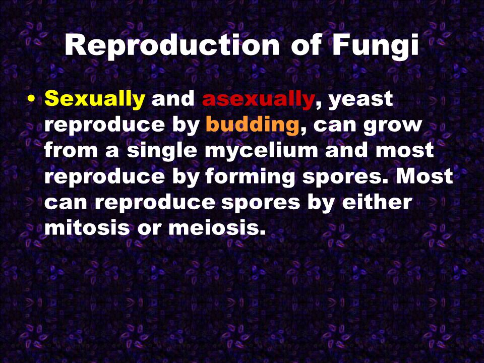 Reproduction of Fungi Sexually and asexually, yeast reproduce by budding, can grow from a single mycelium and most reproduce by forming spores. Most c