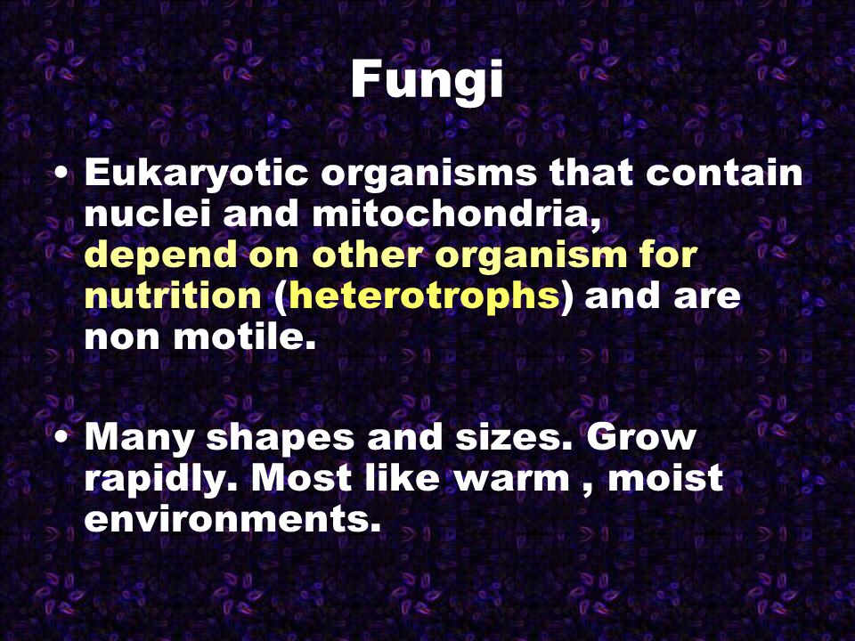 Fungi are made of filamentous tubes called hyphae.
