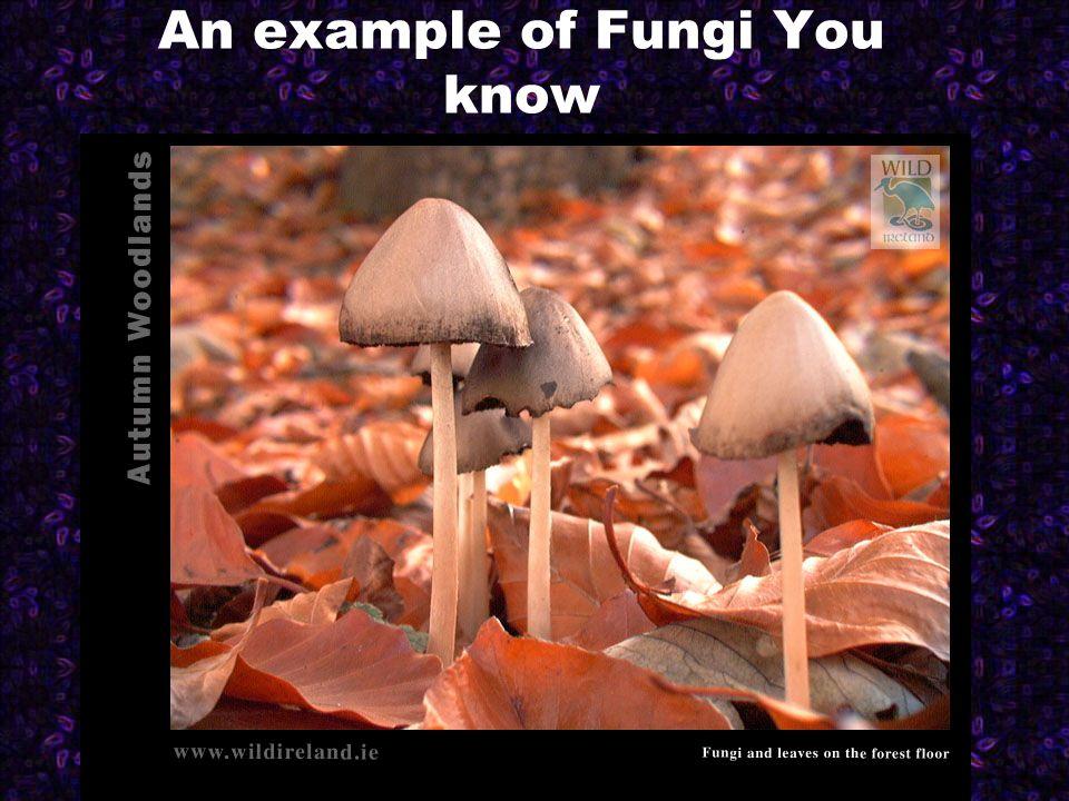1.Zygomycota Include many important decomposers.