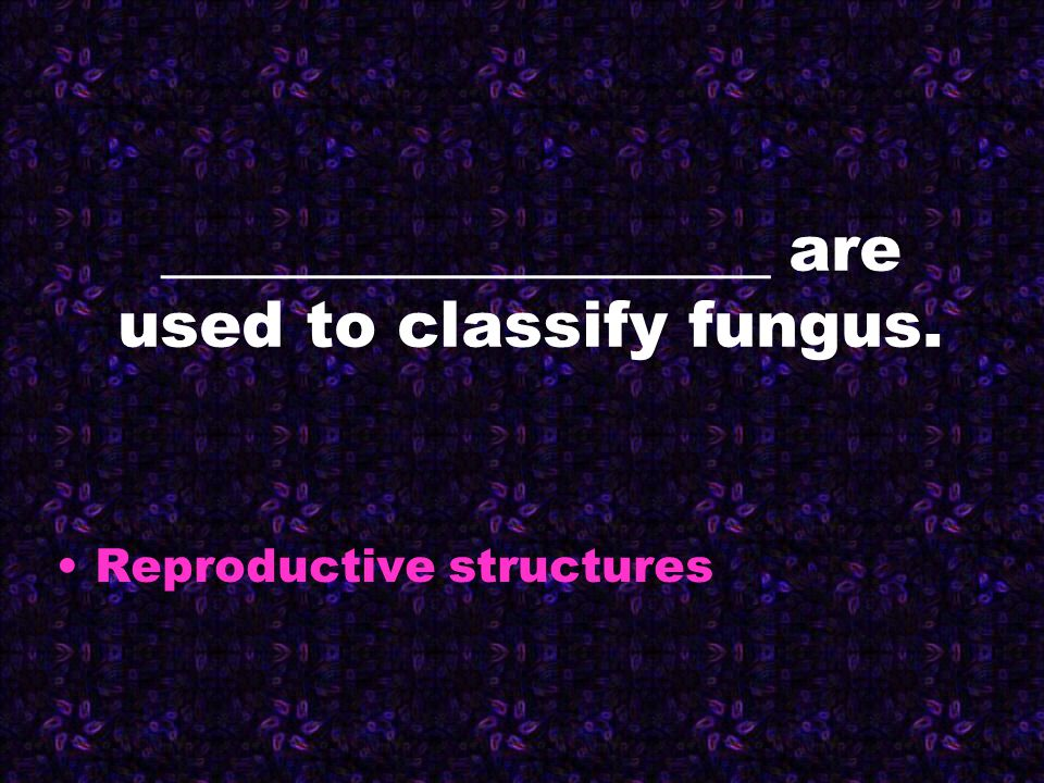 ___________________ are used to classify fungus. Reproductive structures