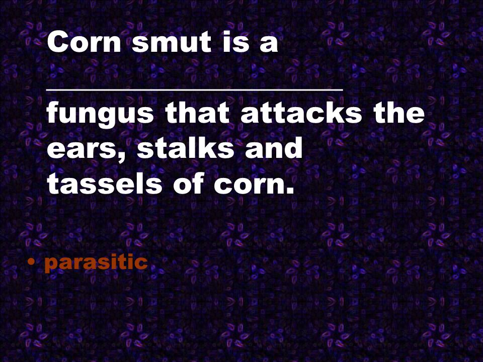 Corn smut is a ____________________ fungus that attacks the ears, stalks and tassels of corn. parasitic