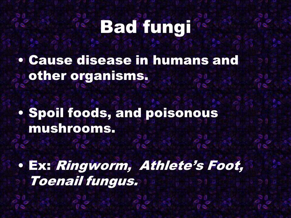 3 Methods fungi obtain food 1.