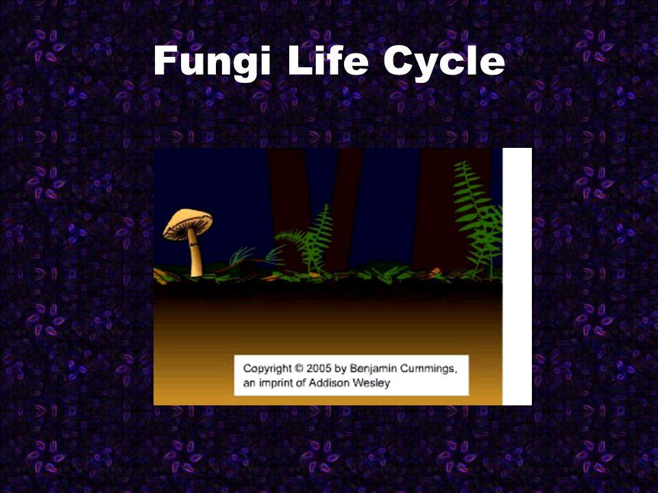 Puffball Stinkhorn Mushrooms