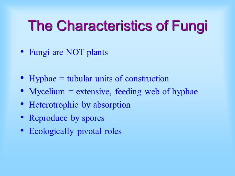 The Characteristics of Fungi Fungi are NOT plants Hyphae = tubular units of construction Mycelium = extensive, feeding web of hyphae Heterotrophic by