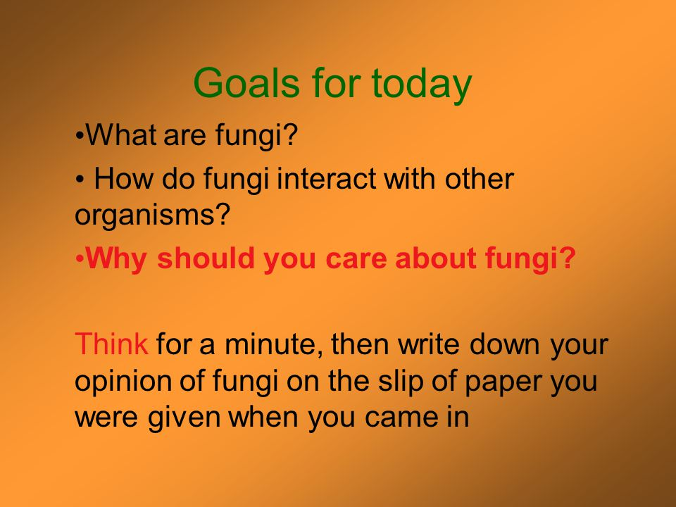 Introduction to the Fungi Some things you should know……