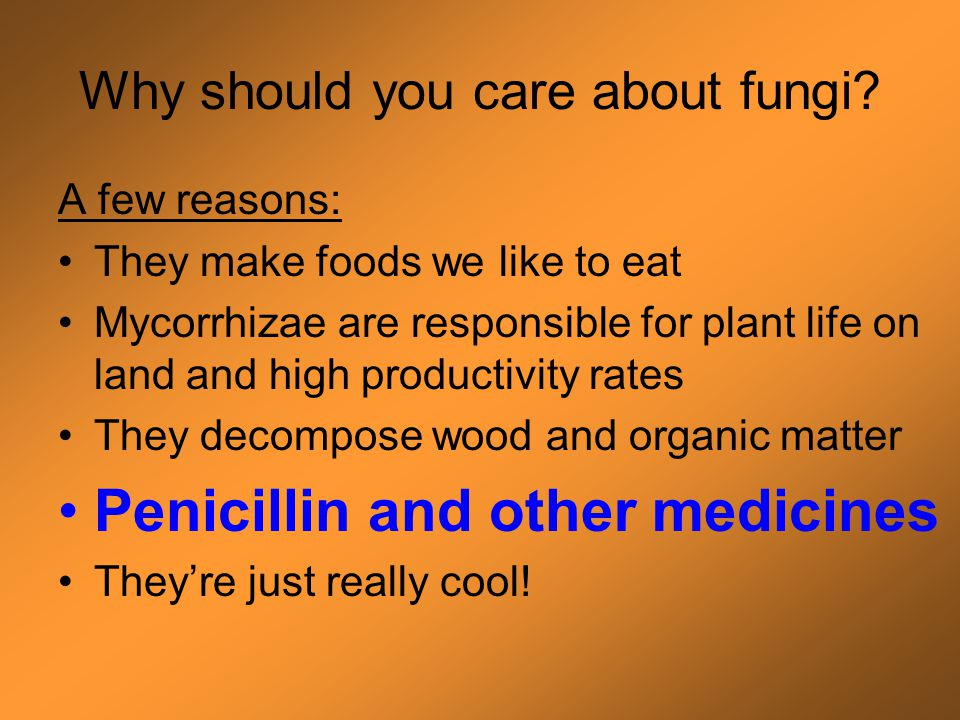 Fungi are important decomposers! Fungi are the only organisms that can completely decompose lignin (what makes wood hard) Lignin must be broken down b