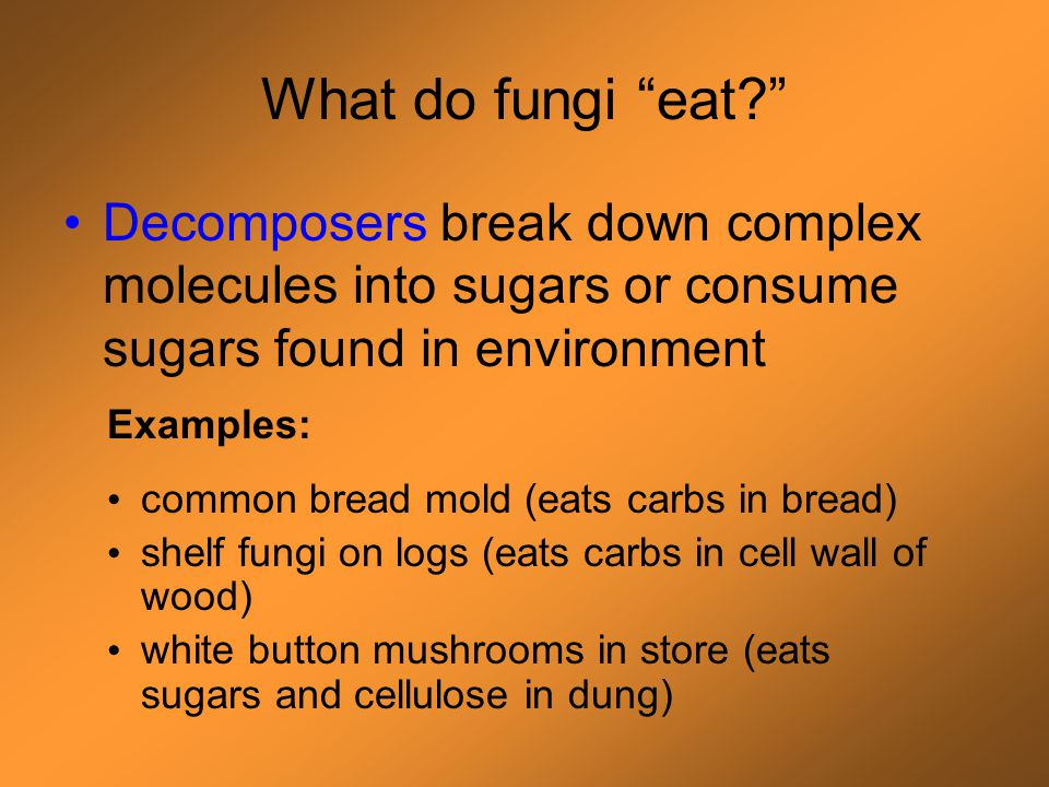 Recap: Definition of fungus Single or multi-celled eukaryote with heterotrophic, absorptive nutrition, chitinous cell walls, and which stores energy as glycogen Live in food source or go dormant in low humidity