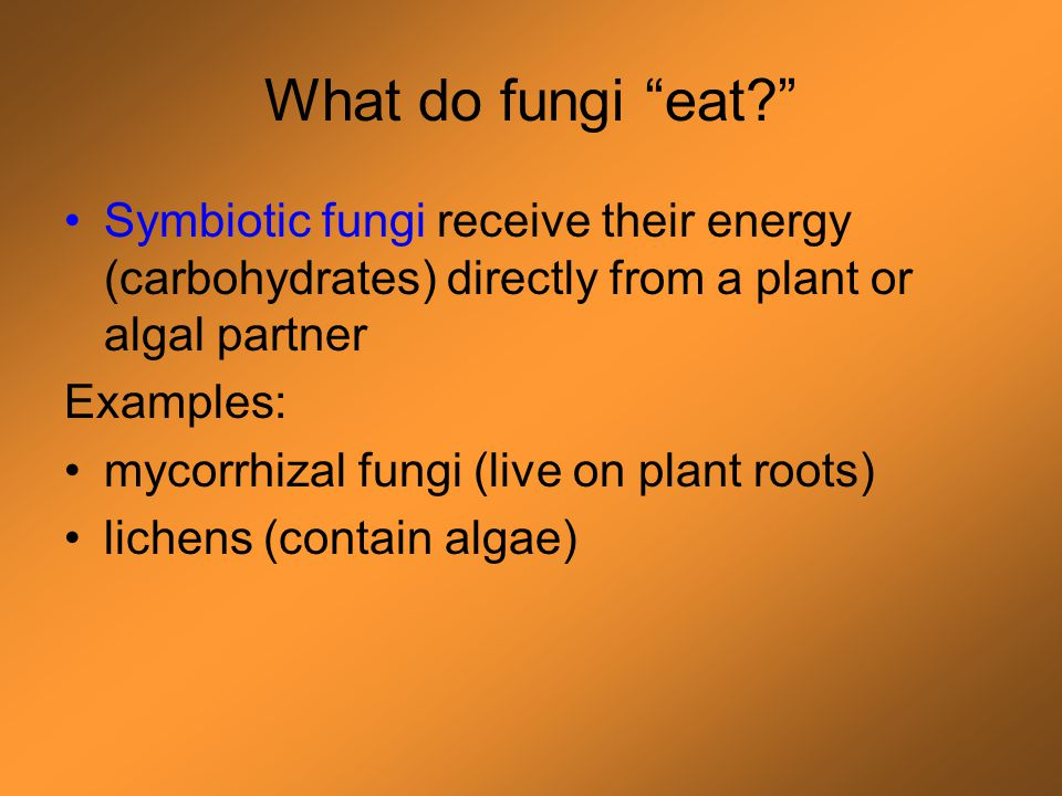"What do fungi ""eat?"" Decomposers break down complex molecules into sugars or consume sugars found in environment Examples: common bread mold (eats car"
