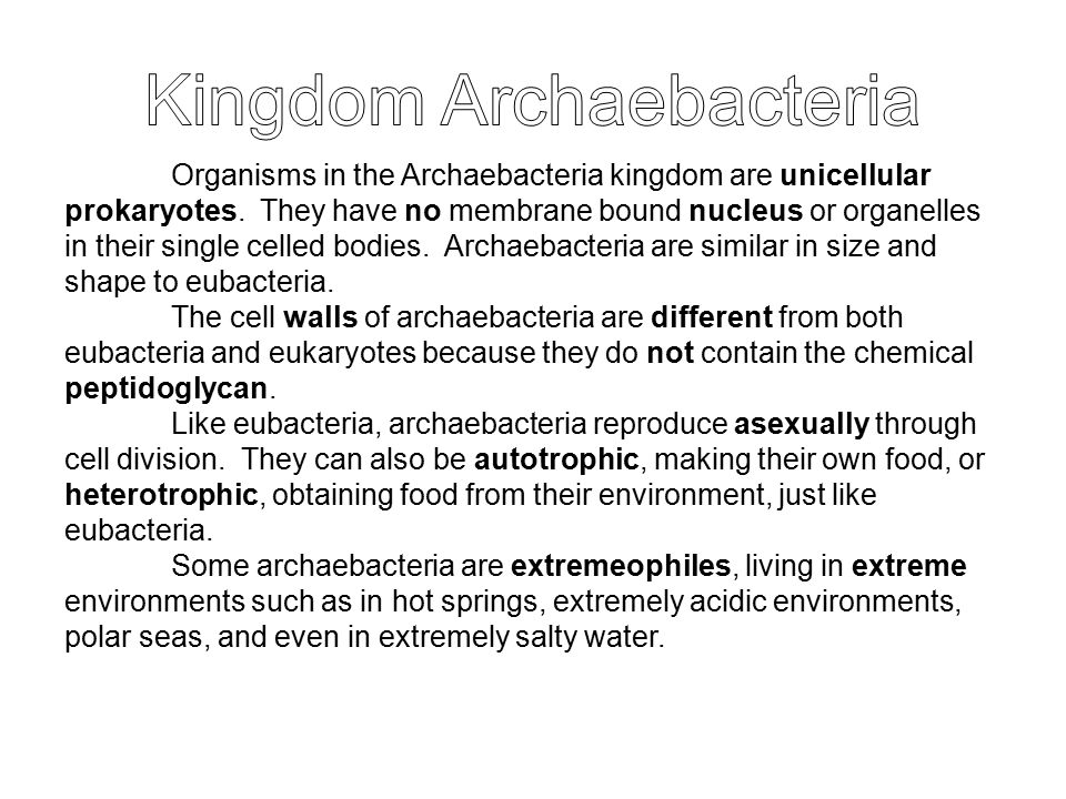 Organisms in the Archaebacteria kingdom are unicellular prokaryotes. They have no membrane bound nucleus or organelles in their single celled bodies.