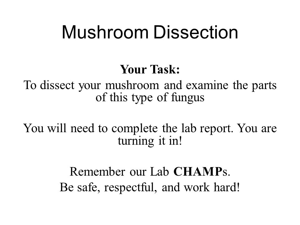 Mushroom Dissection Your Task: To dissect your mushroom and examine the parts of this type of fungus You will need to complete the lab report. You are