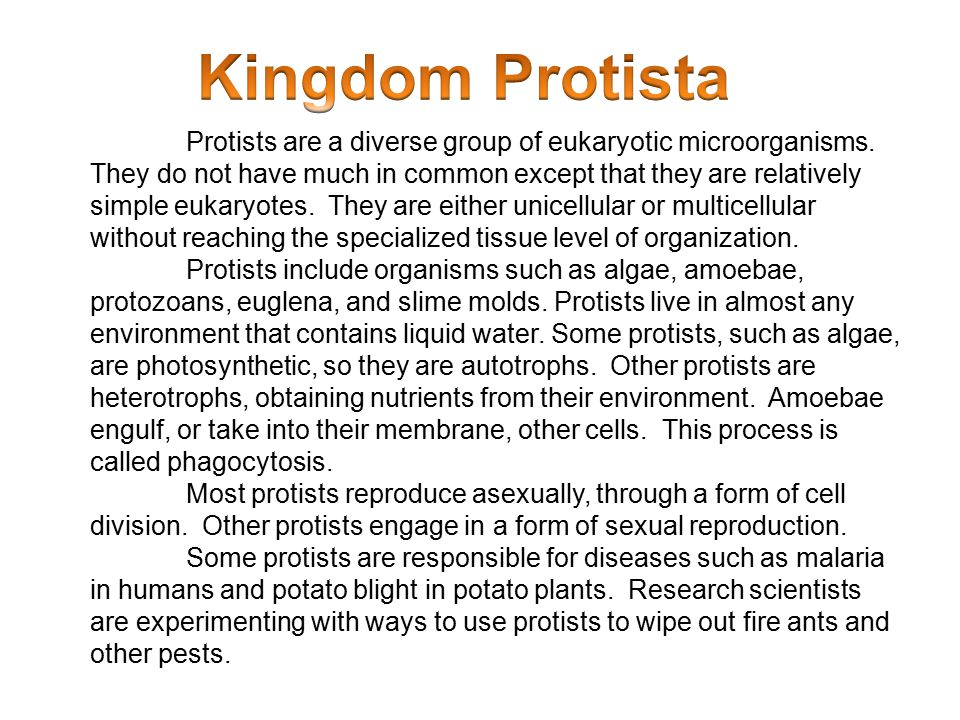 Protists are a diverse group of eukaryotic microorganisms. They do not have much in common except that they are relatively simple eukaryotes. They are