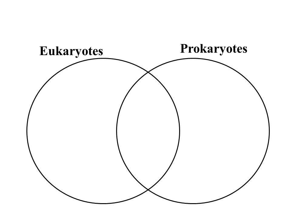 Domain Eukaryota Kingdom