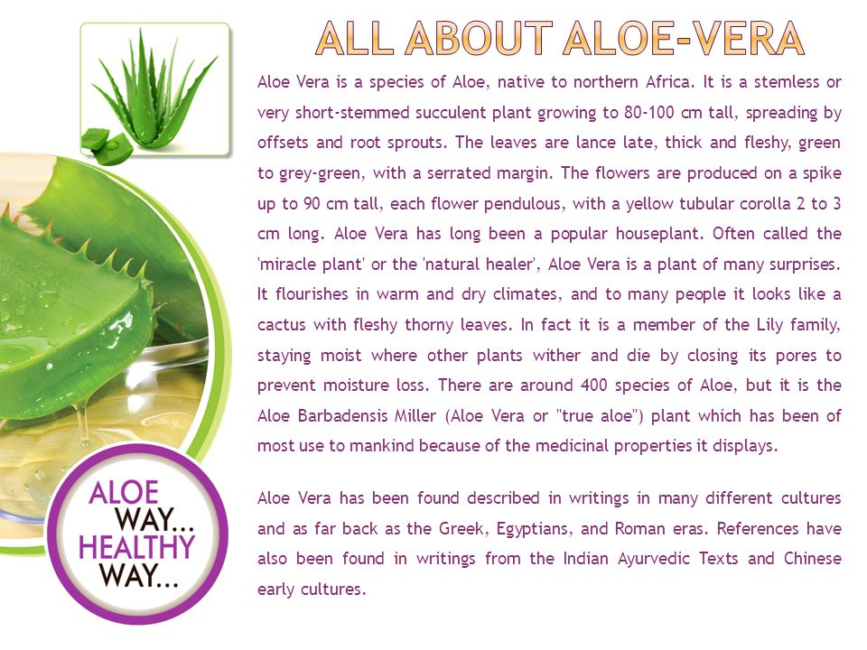 Aloe Vera is a species of Aloe, native to northern Africa.