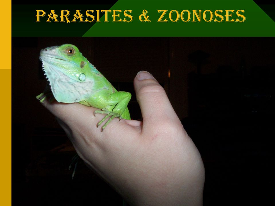 Parasites & Zoonoses Copyright 1996-98 © Dale Carnegie & Associates, Inc.