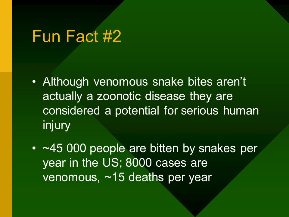 Fun Fact #2 Although venomous snake bites aren't actually a zoonotic disease they are considered a potential for serious human injury ~45 000 people are bitten by snakes per year in the US; 8000 cases are venomous, ~15 deaths per year
