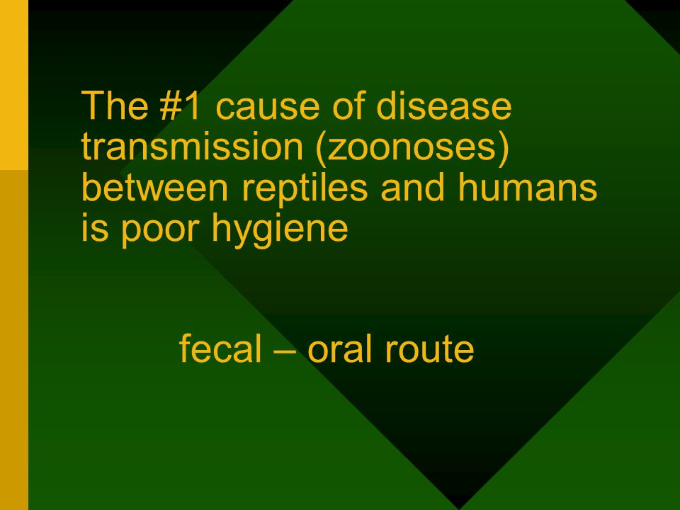 The #1 cause of disease transmission (zoonoses) between reptiles and humans is poor hygiene fecal – oral route