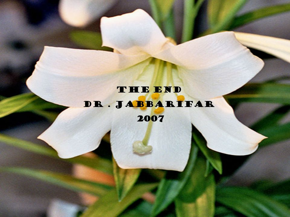 The end Dr. Jabbarifar 2007