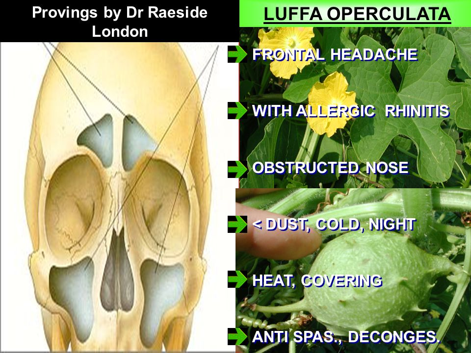 LUFFA OPERCULATA FRONTAL HEADACHE WITH ALLERGIC RHINITIS OBSTRUCTED NOSE < DUST, COLD, NIGHT HEAT, COVERING ANTI SPAS., DECONGES.