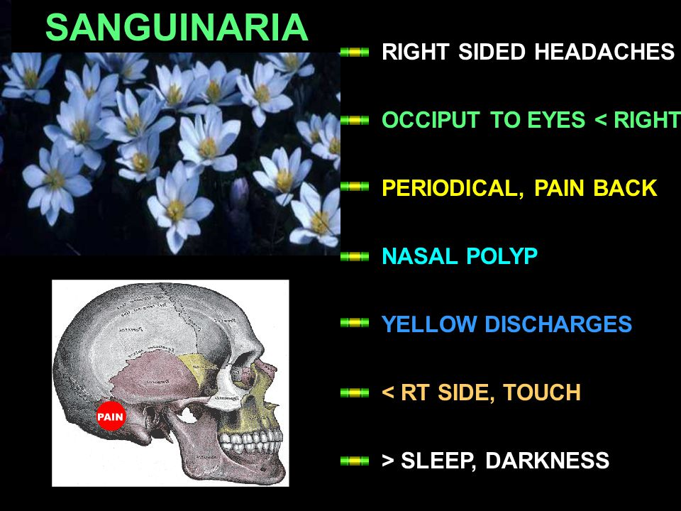 SANGUINARIA RIGHT SIDED HEADACHES OCCIPUT TO EYES < RIGHT PERIODICAL, PAIN BACK NASAL POLYP YELLOW DISCHARGES < RT SIDE, TOUCH > SLEEP, DARKNESS
