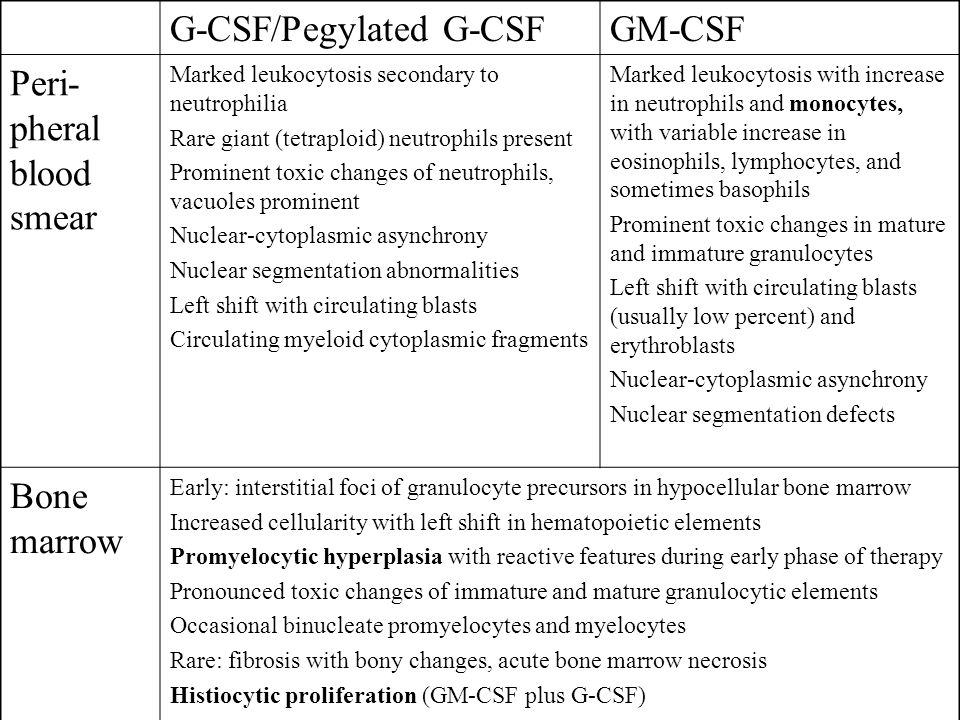 G-CSF/Pegylated G-CSFGM-CSF Peri- pheral blood smear Marked leukocytosis secondary to neutrophilia Rare giant (tetraploid) neutrophils present Prominent toxic changes of neutrophils, vacuoles prominent Nuclear-cytoplasmic asynchrony Nuclear segmentation abnormalities Left shift with circulating blasts Circulating myeloid cytoplasmic fragments Marked leukocytosis with increase in neutrophils and monocytes, with variable increase in eosinophils, lymphocytes, and sometimes basophils Prominent toxic changes in mature and immature granulocytes Left shift with circulating blasts (usually low percent) and erythroblasts Nuclear-cytoplasmic asynchrony Nuclear segmentation defects Bone marrow Early: interstitial foci of granulocyte precursors in hypocellular bone marrow Increased cellularity with left shift in hematopoietic elements Promyelocytic hyperplasia with reactive features during early phase of therapy Pronounced toxic changes of immature and mature granulocytic elements Occasional binucleate promyelocytes and myelocytes Rare: fibrosis with bony changes, acute bone marrow necrosis Histiocytic proliferation (GM-CSF plus G-CSF)