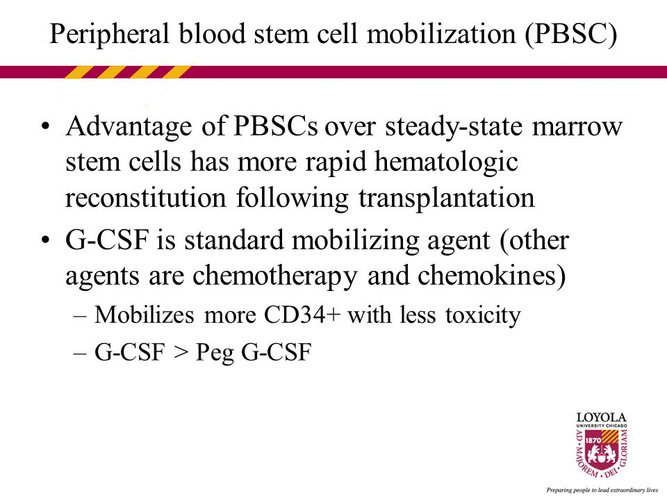 Peripheral blood stem cell mobilization (PBSC) Advantage of PBSCs over steady-state marrow stem cells has more rapid hematologic reconstitution following transplantation G-CSF is standard mobilizing agent (other agents are chemotherapy and chemokines) –Mobilizes more CD34+ with less toxicity –G-CSF > Peg G-CSF