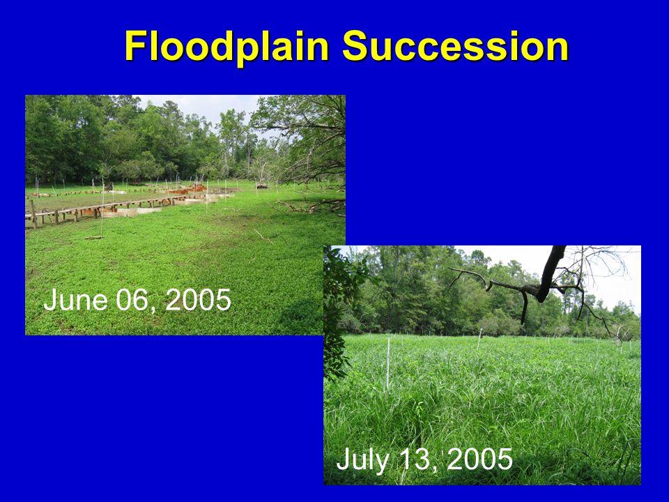 June 06, 2005 Floodplain Succession July 13, 2005