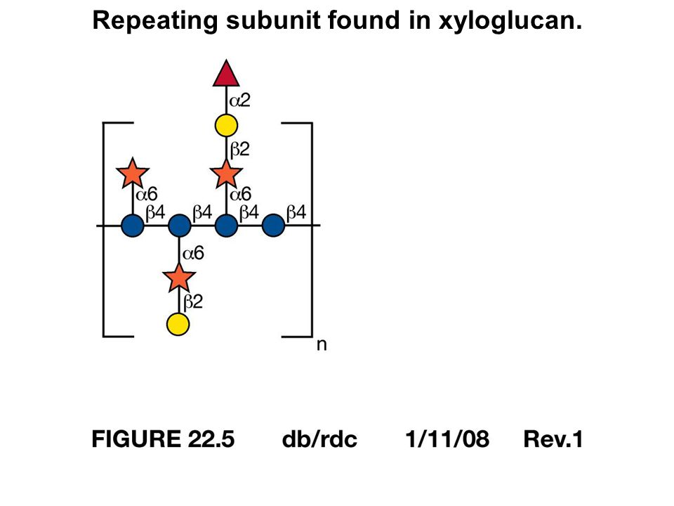 Repeating subunit found in xyloglucan.