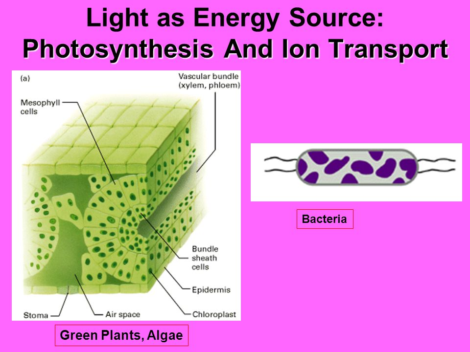 Light as Information Source Phototaxis Phototropism Light-dependent Changes in Metabolism Photomorphogenesis Photoperiodism (circadian rhythms) Vision