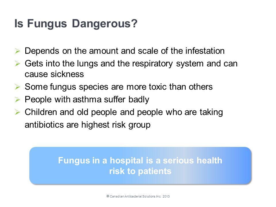 Is Fungus Dangerous.