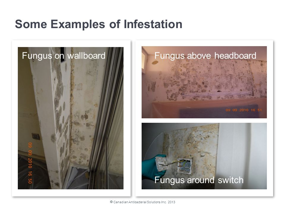 Fungus around switch Fungus above headboard Some Examples of Infestation  Canadian Antibacterial Solutions Inc.