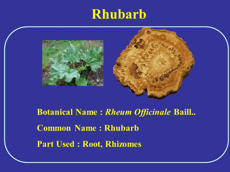 Rhubarb Botanical Name : Rheum Officinale Baill.. Common Name : Rhubarb Part Used : Root, Rhizomes