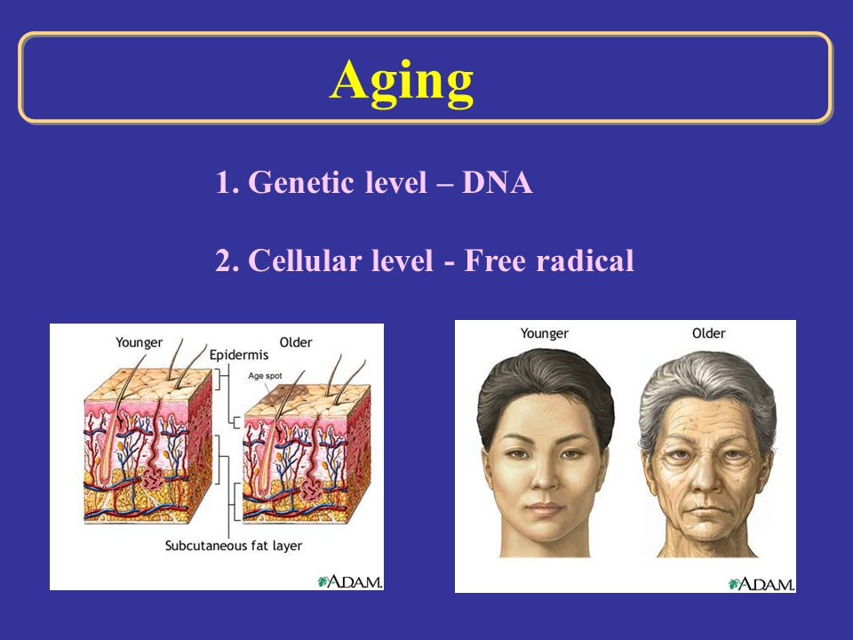 Aging 1. Genetic level – DNA 2. Cellular level - Free radical