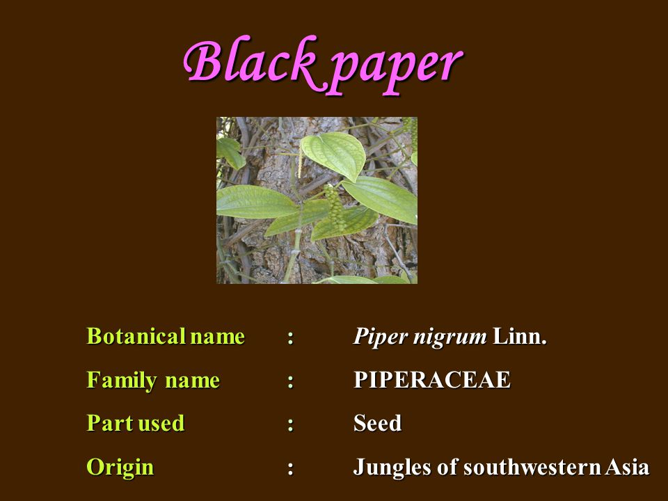 Botanical name : Piper nigrum Linn. Family name : PIPERACEAE Part used : Seed Origin: Jungles of southwestern Asia Black paper
