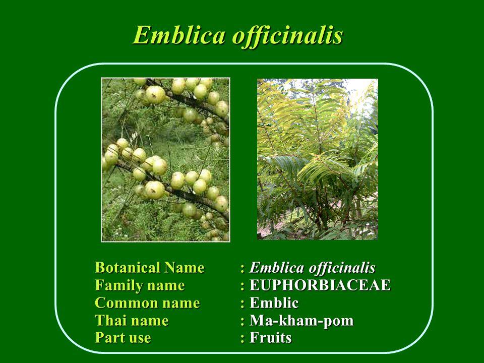 Botanical Name : Emblica officinalis Family name : EUPHORBIACEAE Common name : Emblic Thai name: Ma-kham-pom Part use : Fruits Emblica officinalis