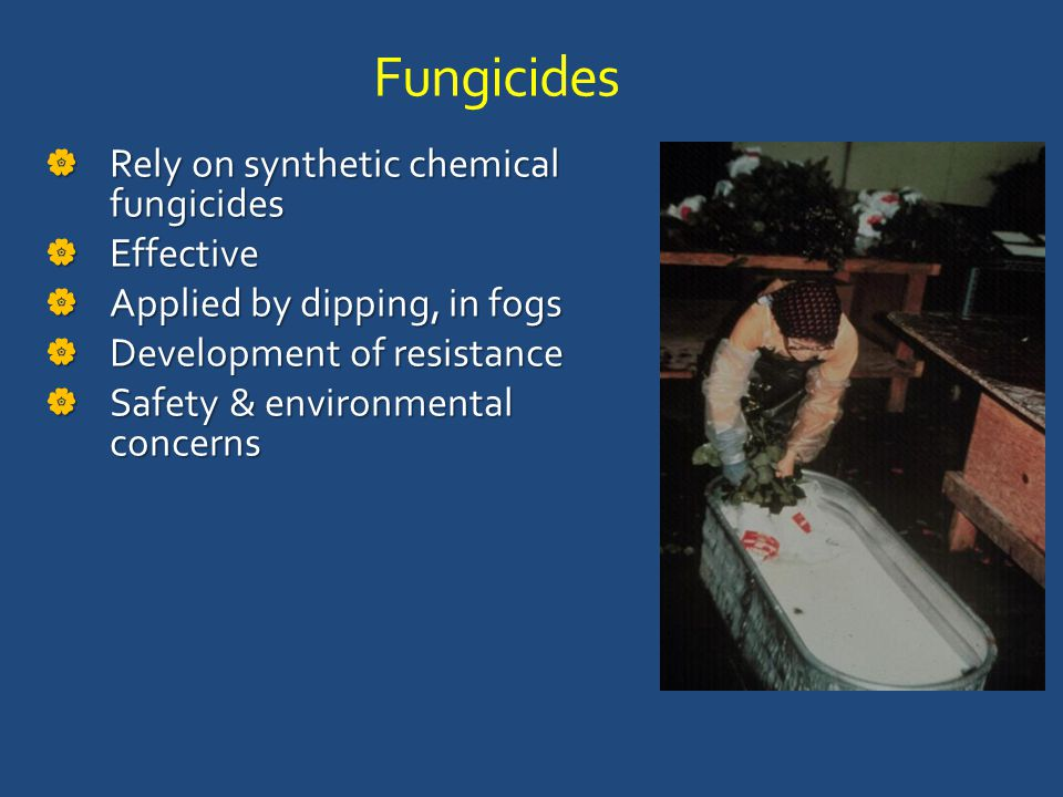 Fungicides  Rely on synthetic chemical fungicides  Effective  Applied by dipping, in fogs  Development of resistance  Safety & environmental concerns