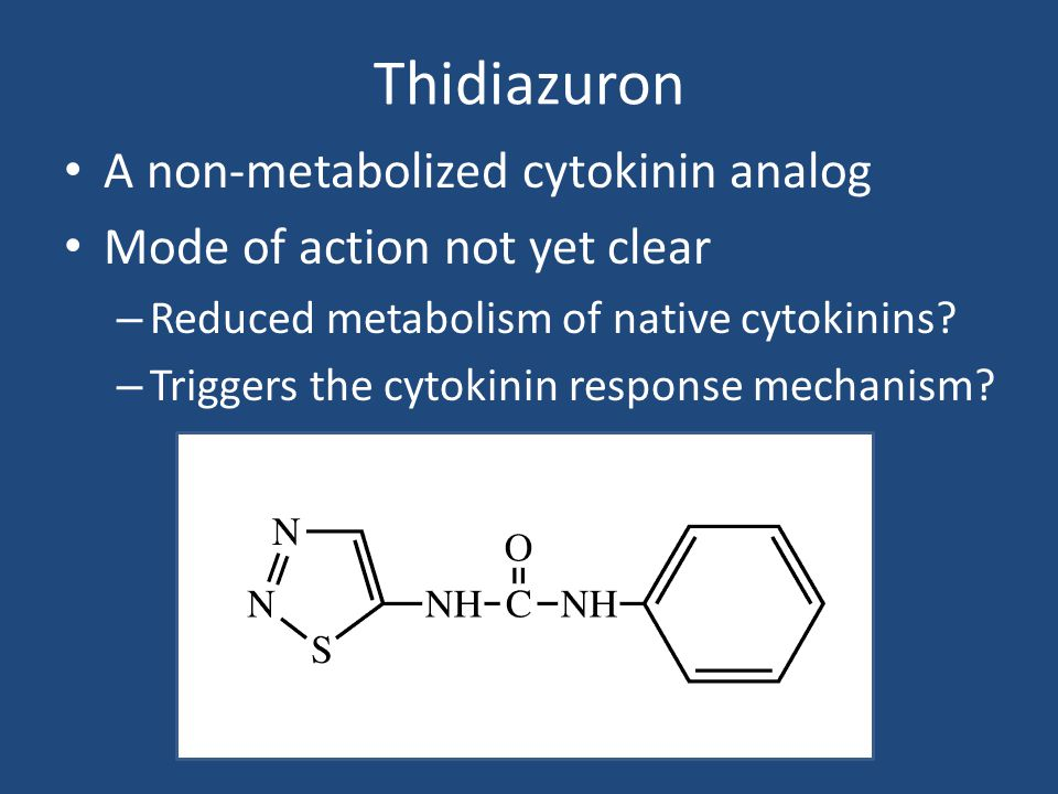 Thidiazuron A non-metabolized cytokinin analog Mode of action not yet clear – Reduced metabolism of native cytokinins.