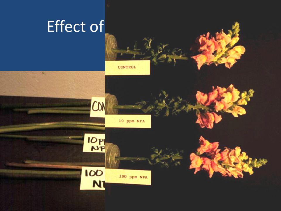 Effect of NPA pretreatment