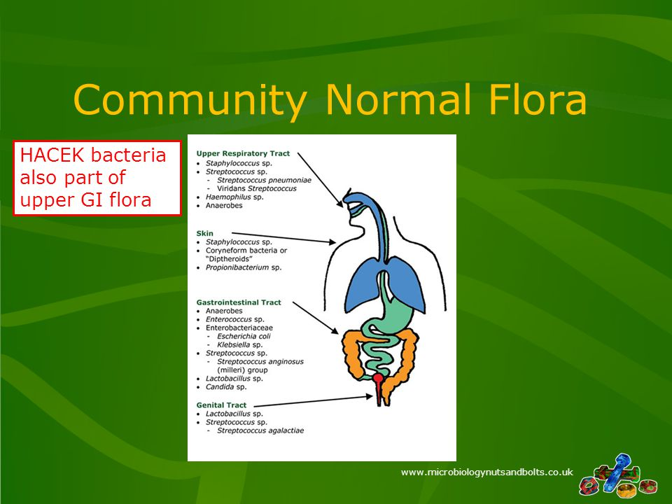 www.microbiologynutsandbolts.co.uk Community Normal Flora HACEK bacteria also part of upper GI flora
